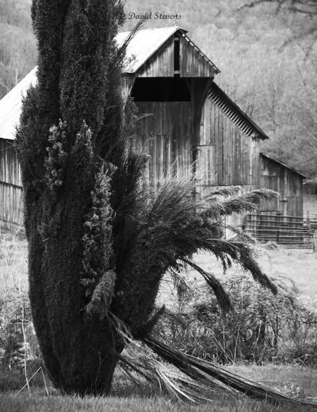 Damaged bush barn