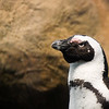 "<span id=""title"">Penguin</span> These guys are pretty entertaining"