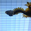 """<span id=""""title"""">Gecko Tail</span> We had a great time on the morning of 8/1 at the newly redesigned California Sciences Academy. It's an amazing building with terrific exhibits. This gecko in the rain forest exhibit preferred the ceiling."""