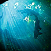 """<span id=""""title"""">Amazon Fish</span> The rain forest exhibit included an impressive variety of Amazon fish that you could walk under"""