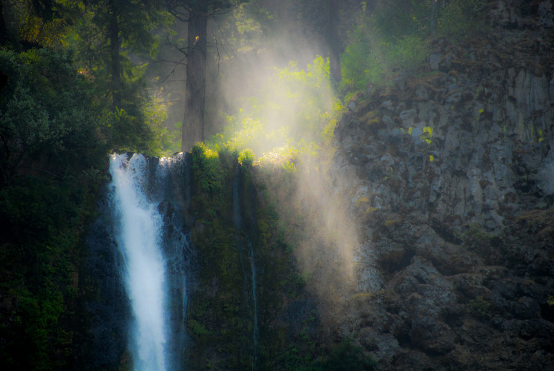 """<span id=""""title"""">Multnomah Mist</span> A lot of the water going over the falls becomes mist, highlighted here by light filtering through the trees. The observation deck is to the left, just out of view."""