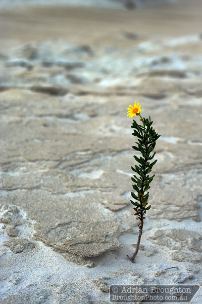 A lone flower in the sand.