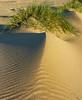 Mini Dune, Lawson's Landing, CA.
