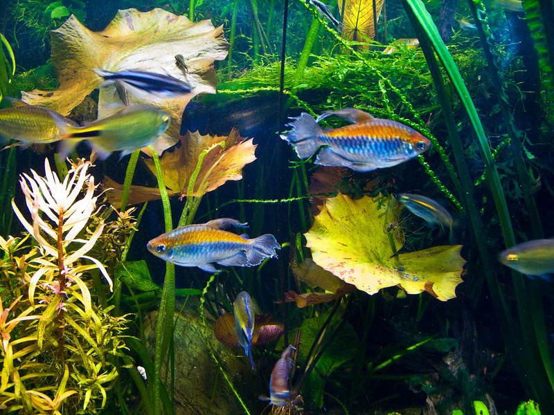 Monterey Aquarium 1