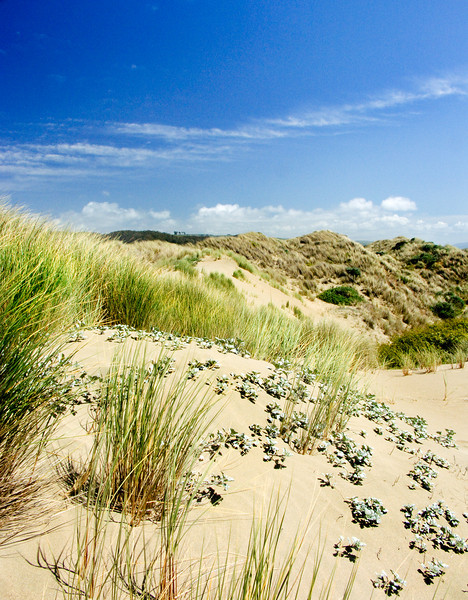 Lawson's Landing Dunes, CA.