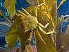Crab, Monterey Aquarium