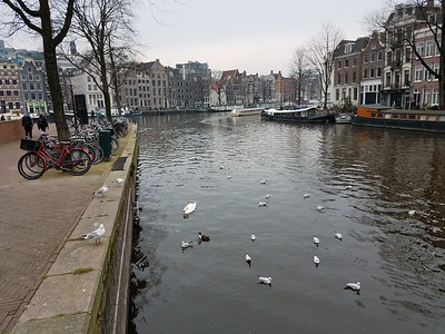 assorted birds on canal