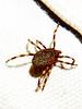 Unidnetified arachnid, Goegap Nature Reserve