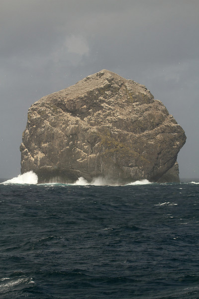 The Stacks, white with gannets