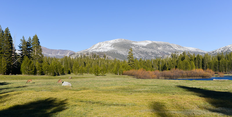 Tuolumne Meadows, Yosemite Park