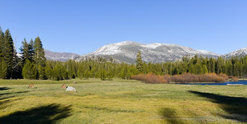 Tuolumne Meadows, Yosemite Park
