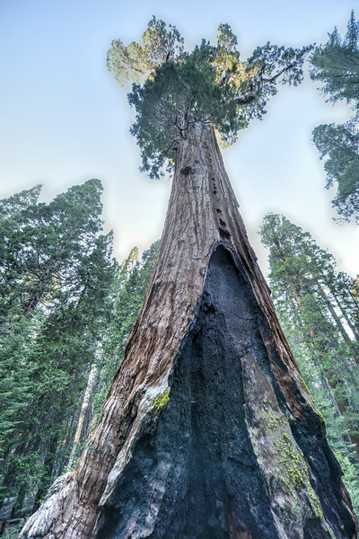 General Grant Sequoia Tree, Kings Canyon National Park