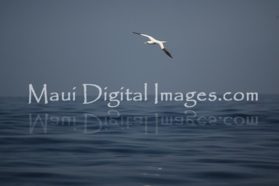 Whale Watch 2.13.11