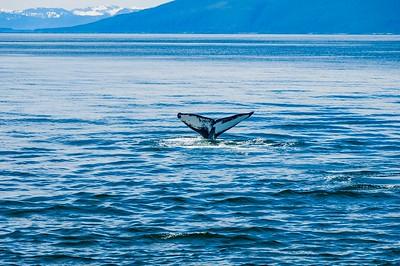 Alaska - Whale Watching 2012