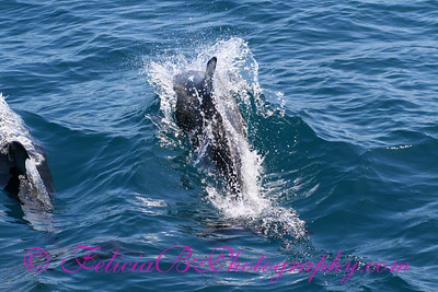 DP Whale Watching 051