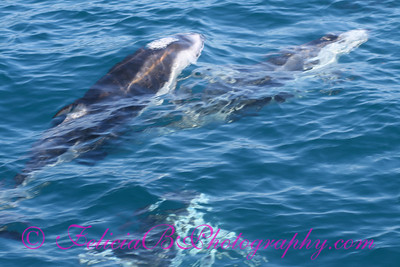 DP Whale Watching 047
