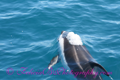 DP Whale Watching 056