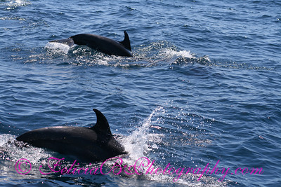 DP Whale Watching 035