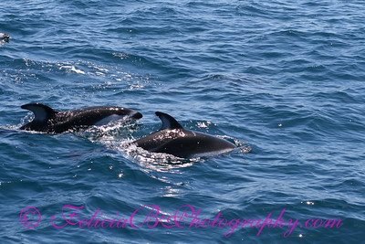DP Whale Watching 012
