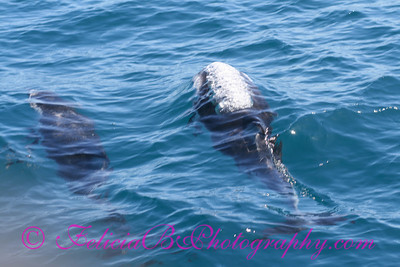 DP Whale Watching 050