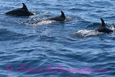 DP Whale Watching 029