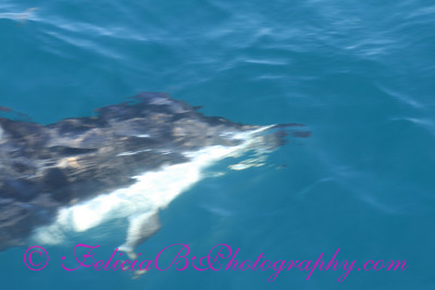 DP Whale Watching 040