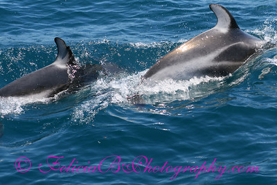 DP Whale Watching 049