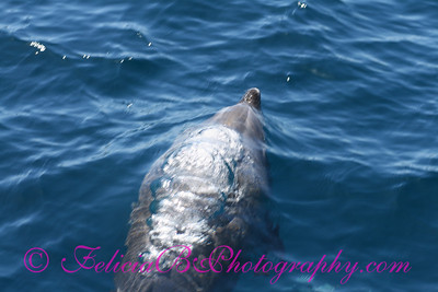 DP Whale Watching 030