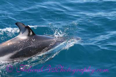 DP Whale Watching 059