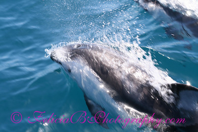 DP Whale Watching 054