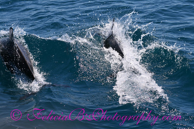 DP Whale Watching 052