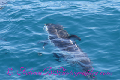 DP Whale Watching 041