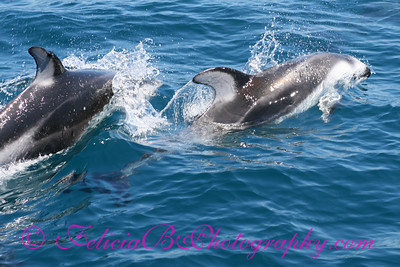 DP Whale Watching 048