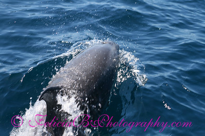 DP Whale Watching 031