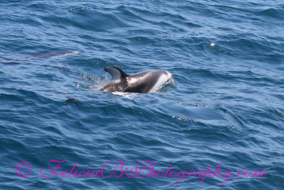 DP Whale Watching 013