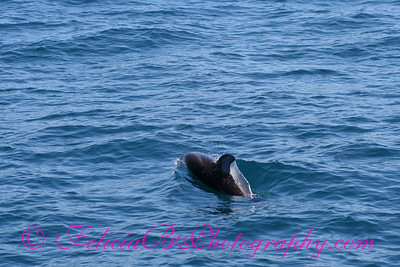 DP Whale Watching 043