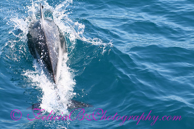 DP Whale Watching 039