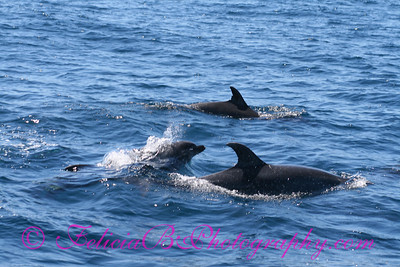 DP Whale Watching 024