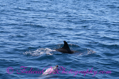 DP Whale Watching 027