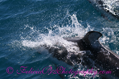 DP Whale Watching 055