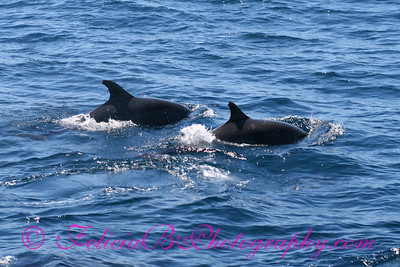 DP Whale Watching 028