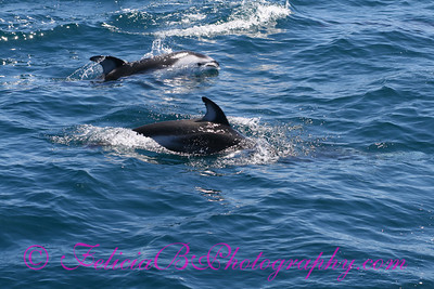 DP Whale Watching 011