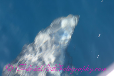 DP Whale Watching 038