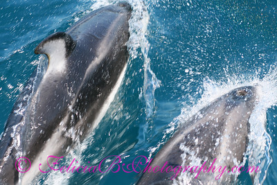 DP Whale Watching 046