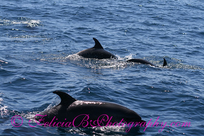 DP Whale Watching 034