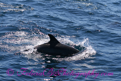 DP Whale Watching 033