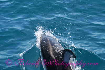 DP Whale Watching 057
