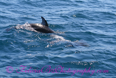 DP Whale Watching 014