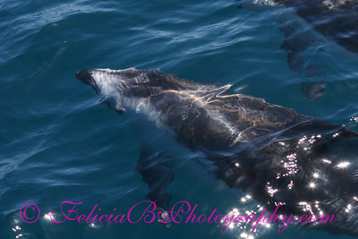 DP Whale Watching 053