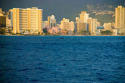 Whales Waikiki Hawaii